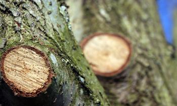Обрезка и удаление деревьев во Владимире и области